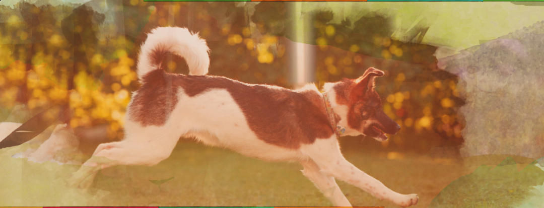 leech-banner-dog-copy.png
